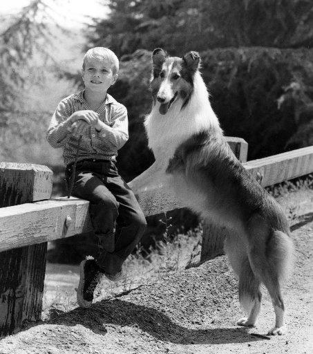 Lassie & Timmy (AP photo)